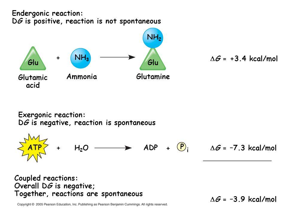 Endergonic reaction: DG is positive, reaction is not spontaneous Exergonic reaction: DG is negative, reaction is spontaneous G = +3.4 kcal/mol G = –7.