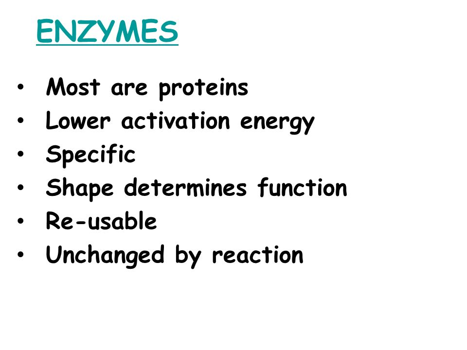ENZYMES Most are proteins Lower activation energy Specific Shape determines function Re-usable Unchanged by reaction