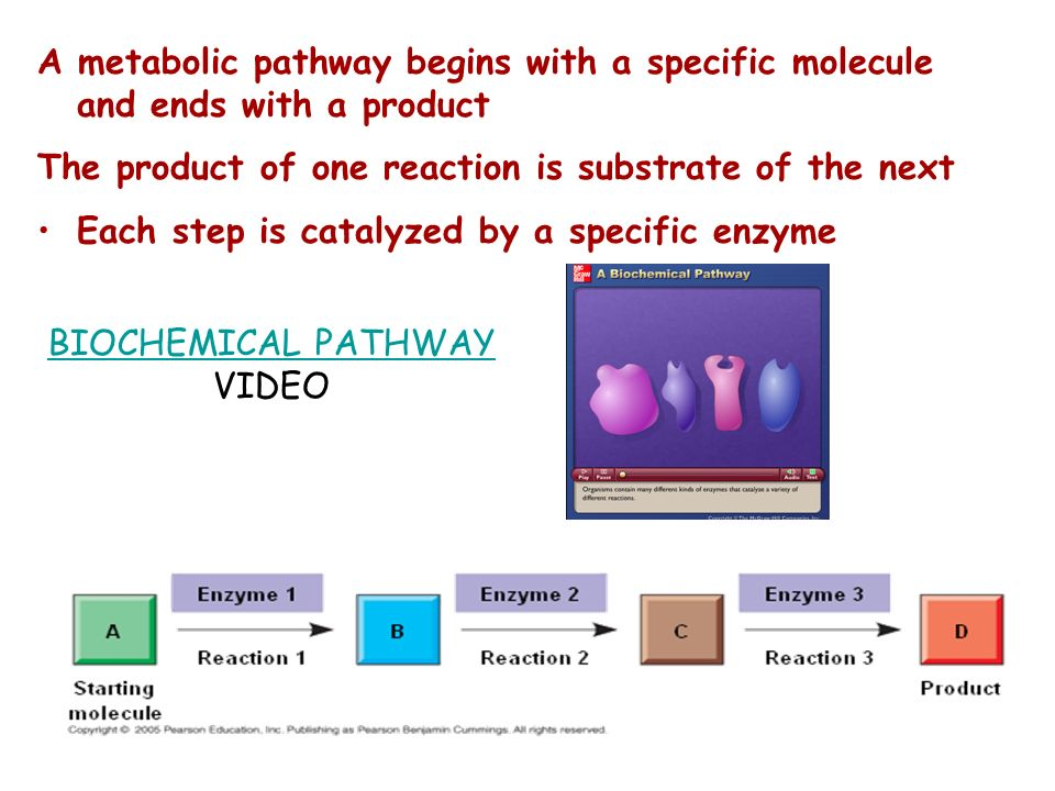 A metabolic pathway begins with a specific molecule and ends with a product The product of one reaction is substrate of the next Each step is catalyze