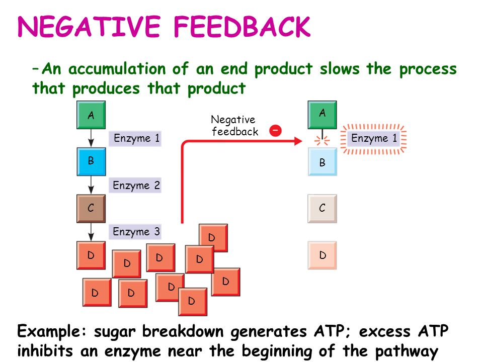 NEGATIVE FEEDBACK –An accumulation of an end product slows the process that produces that product B A C D Enzyme 1 Enzyme 2 Enzyme 3 D D D D D D D D D