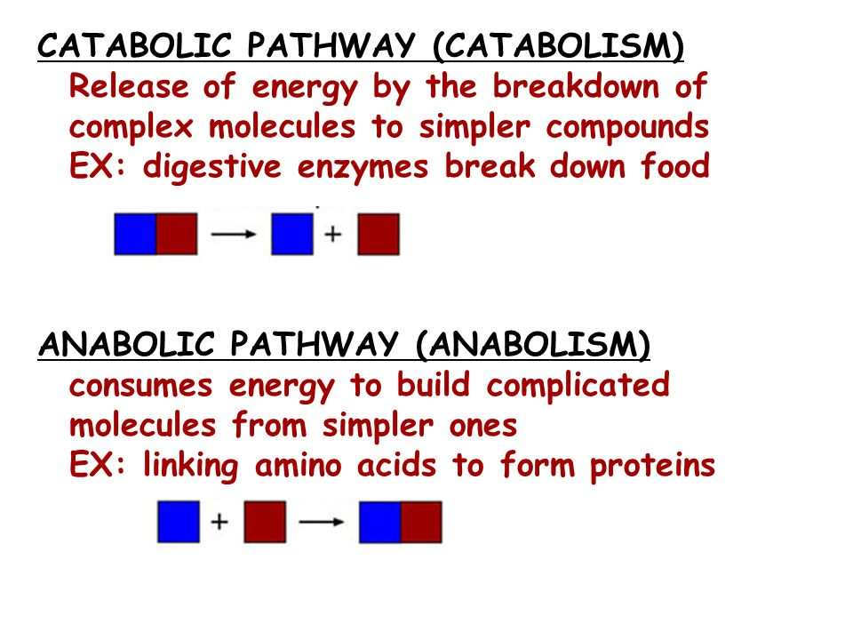 CATABOLIC PATHWAY (CATABOLISM) Release of energy by the breakdown of complex molecules to simpler compounds EX: digestive enzymes break down food ANAB