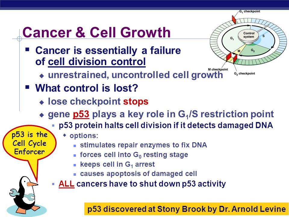 AP Biology Growth Factors and Cancer Growth factors can create cancers Growth promoter genes normally activates cell division growth factor genes beco