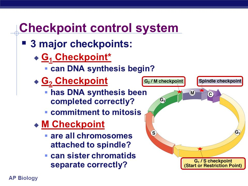 AP Biology Checkpoint control system 3 major checkpoints: G 1 Checkpoint* can DNA synthesis begin.