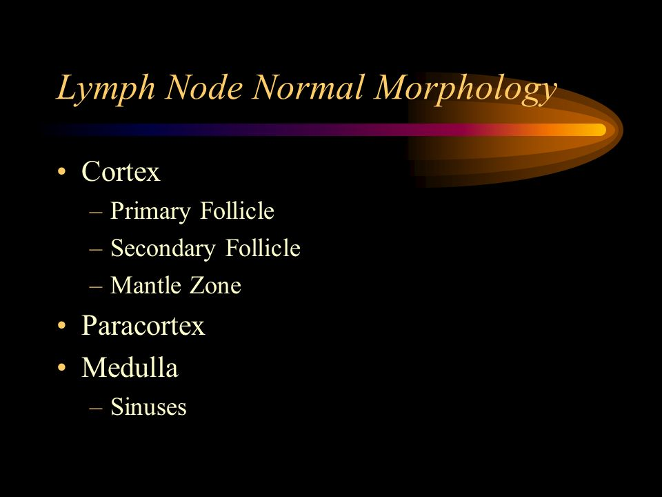 Lymph Node Normal Morphology Cortex –Primary Follicle –Secondary Follicle –Mantle Zone Paracortex Medulla –Sinuses