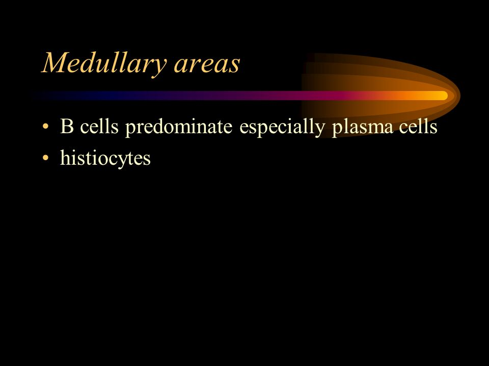 Medullary areas B cells predominate especially plasma cells histiocytes