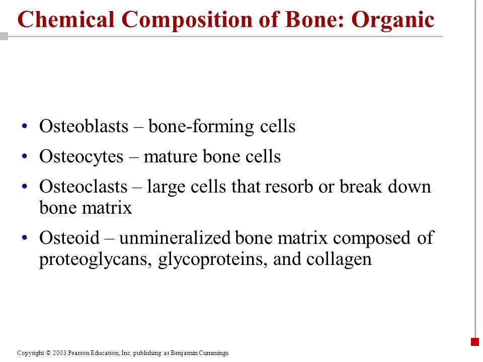Copyright © 2003 Pearson Education, Inc. publishing as Benjamin Cummings Chemical Composition of Bone: Organic Osteoblasts – bone-forming cells Osteoc