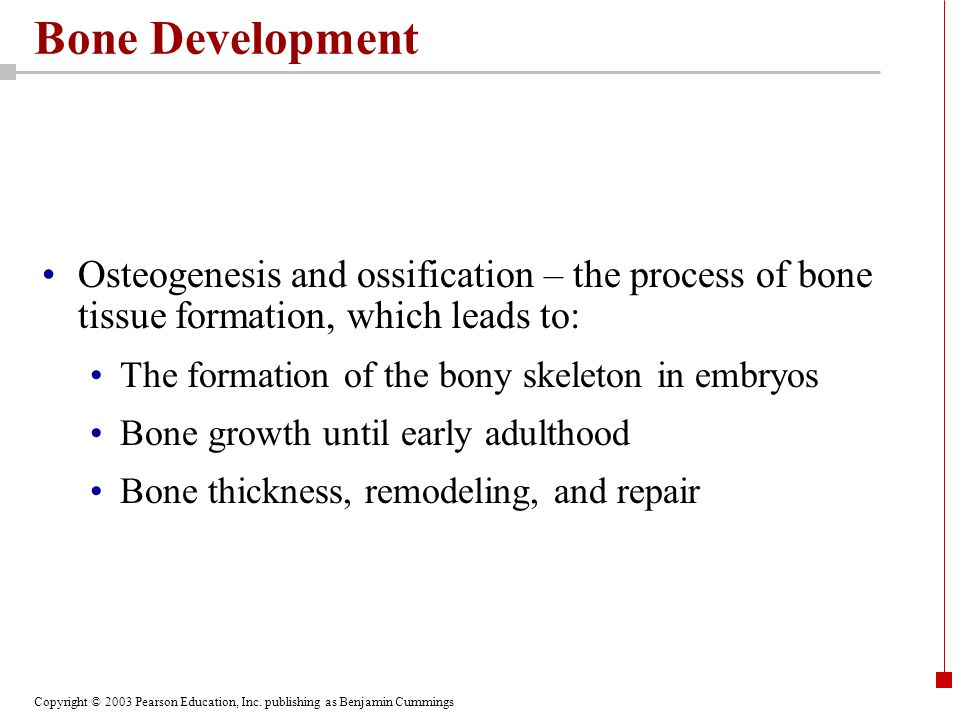Copyright © 2003 Pearson Education, Inc. publishing as Benjamin Cummings Bone Development Osteogenesis and ossification – the process of bone tissue f