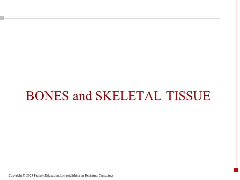 Copyright © 2003 Pearson Education, Inc. publishing as Benjamin Cummings BONES and SKELETAL TISSUE