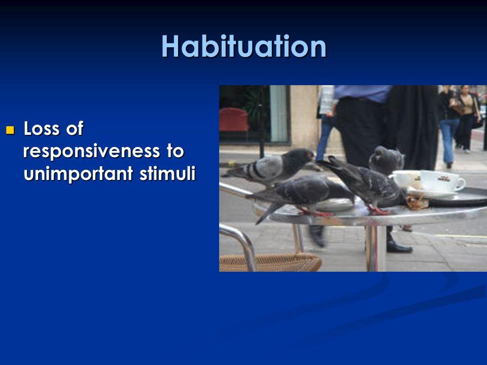 Habituation Loss of responsiveness to unimportant stimuli Loss of responsiveness to unimportant stimuli