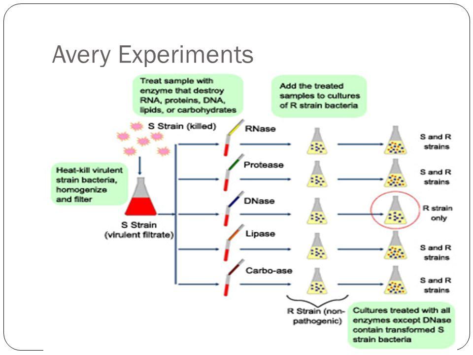 Avery Experiments