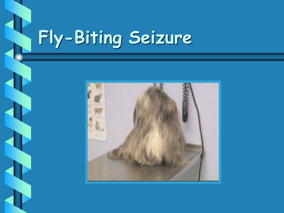 Fly-Biting Seizure