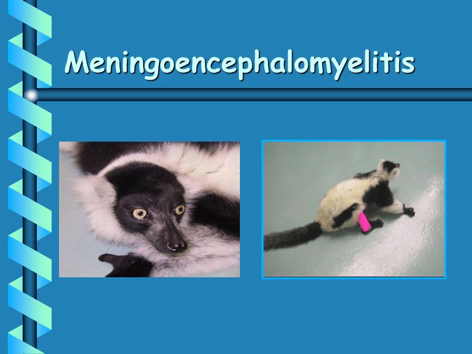 Meningoencephalomyelitis