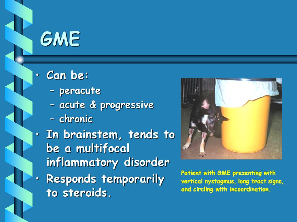 GME Can be:Can be: –peracute –acute & progressive –chronic In brainstem, tends to be a multifocal inflammatory disorderIn brainstem, tends to be a multifocal inflammatory disorder Responds temporarily to steroids.Responds temporarily to steroids.