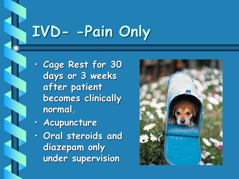 IVD- -Pain Only Cage Rest for 30 days or 3 weeks after patient becomes clinically normal.Cage Rest for 30 days or 3 weeks after patient becomes clinically normal.