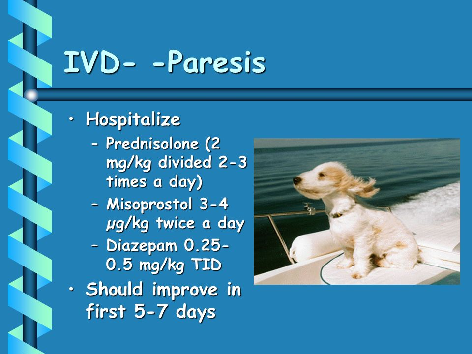 IVD- -Paresis HospitalizeHospitalize –Prednisolone (2 mg/kg divided 2-3 times a day) –Misoprostol 3-4 µg/kg twice a day –Diazepam 0.25- 0.5 mg/kg TID