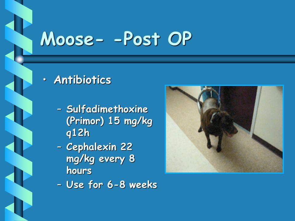 Moose- -Post OP AntibioticsAntibiotics –Sulfadimethoxine (Primor) 15 mg/kg q12h –Cephalexin 22 mg/kg every 8 hours –Use for 6-8 weeks