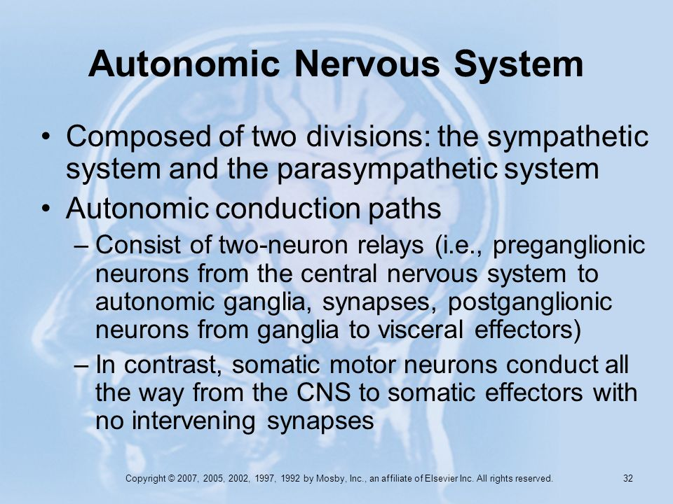 Copyright © 2007, 2005, 2002, 1997, 1992 by Mosby, Inc., an affiliate of Elsevier Inc. All rights reserved. 31 Autonomic Nervous System Autonomic or v