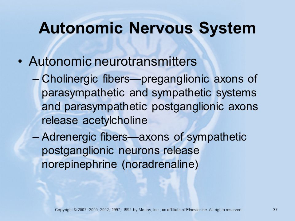 Copyright © 2007, 2005, 2002, 1997, 1992 by Mosby, Inc., an affiliate of Elsevier Inc. All rights reserved. 36 Autonomic Nervous System –Functiondomin