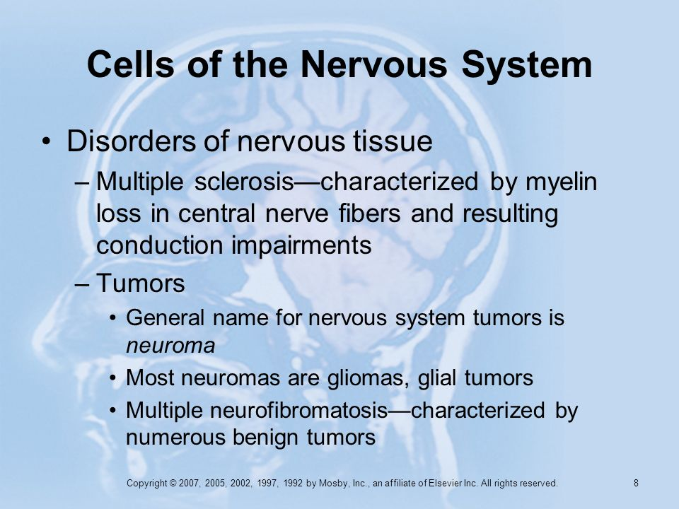 Copyright © 2007, 2005, 2002, 1997, 1992 by Mosby, Inc., an affiliate of Elsevier Inc. All rights reserved. 7 Cells of the Nervous System Glia (neurog