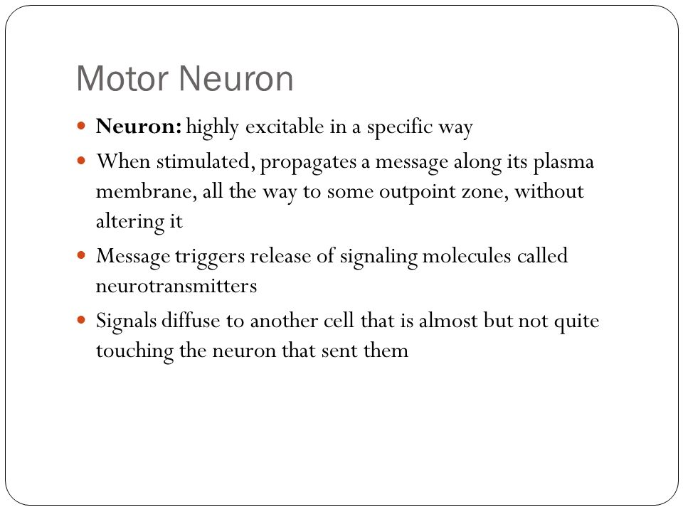 Motor Neuron Neuron: highly excitable in a specific way When stimulated, propagates a message along its plasma membrane, all the way to some outpoint