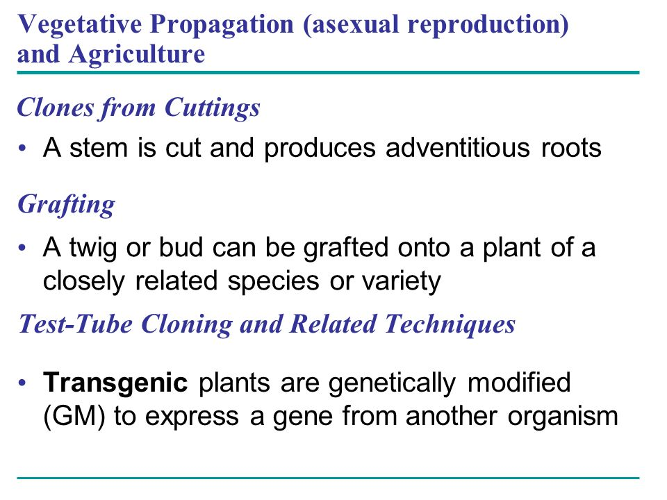 Vegetative Propagation (asexual reproduction) and Agriculture Clones from Cuttings A stem is cut and produces adventitious roots Grafting A twig or bu