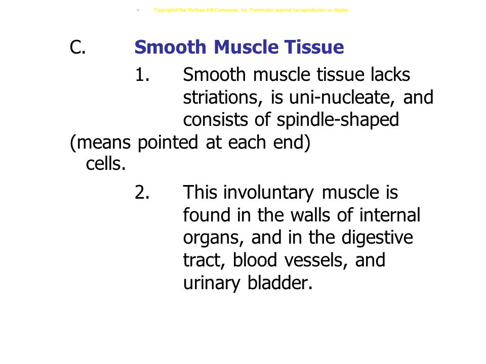 C.Smooth Muscle Tissue 1.Smooth muscle tissue lacks striations, is uni-nucleate, and consists of spindle-shaped (means pointed at each end) cells.
