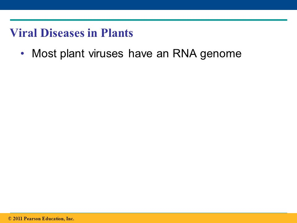 Copyright © 2005 Pearson Education, Inc. publishing as Benjamin Cummings Viral Diseases in Plants Most plant viruses have an RNA genome © 2011 Pearson