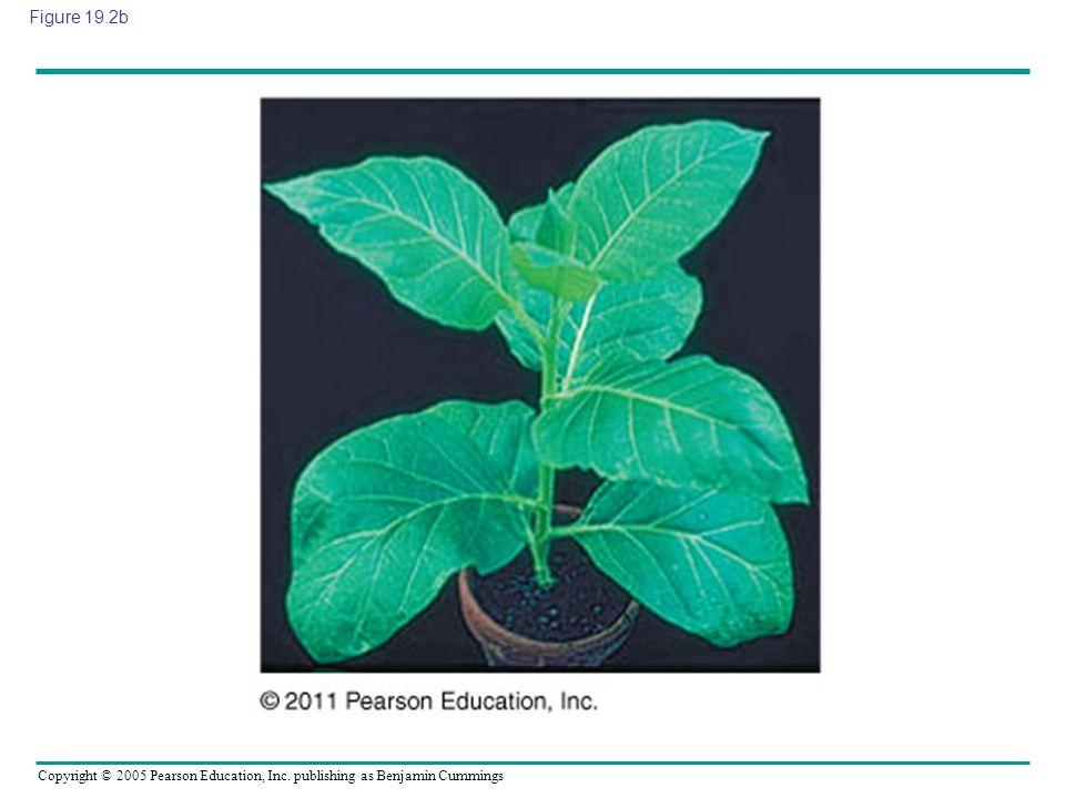 Copyright © 2005 Pearson Education, Inc. publishing as Benjamin Cummings Figure 19.2b