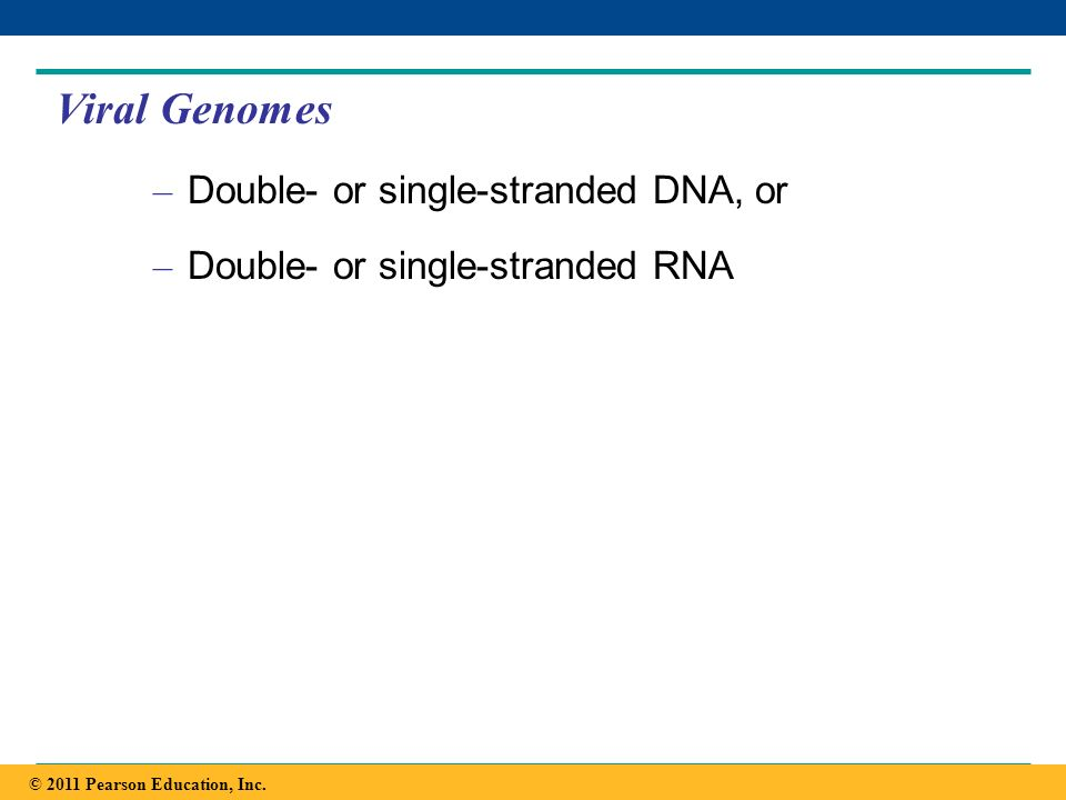 Copyright © 2005 Pearson Education, Inc. publishing as Benjamin Cummings Viral Genomes – Double- or single-stranded DNA, or – Double- or single-strand
