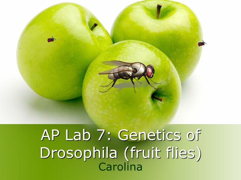 AP Lab 7: Genetics of Drosophila (fruit flies) Carolina