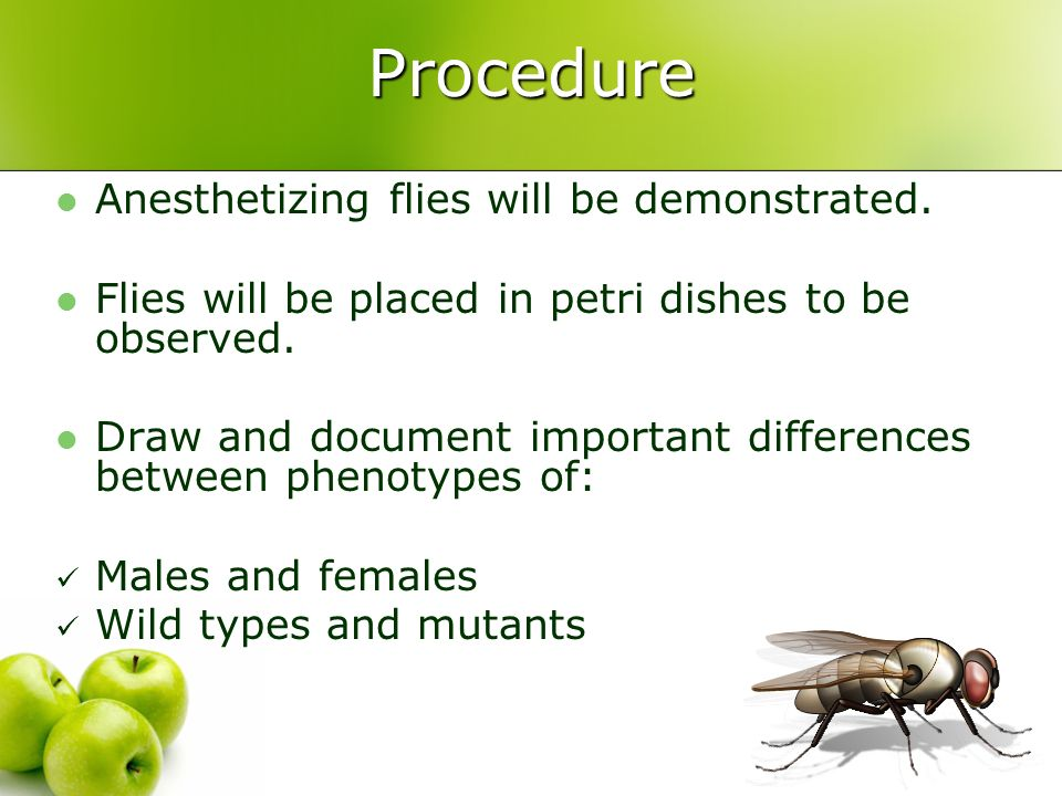 Procedure Anesthetizing flies will be demonstrated. Flies will be placed in petri dishes to be observed. Draw and document important differences betwe