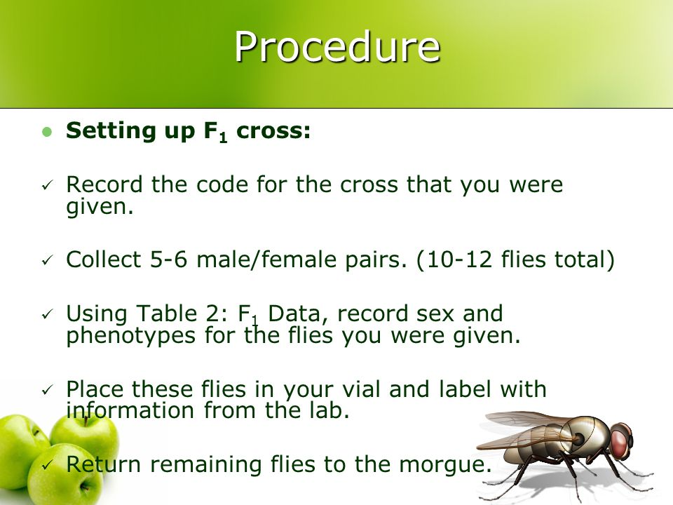 Procedure Setting up F 1 cross: Record the code for the cross that you were given. Collect 5-6 male/female pairs. (10-12 flies total) Using Table 2: F