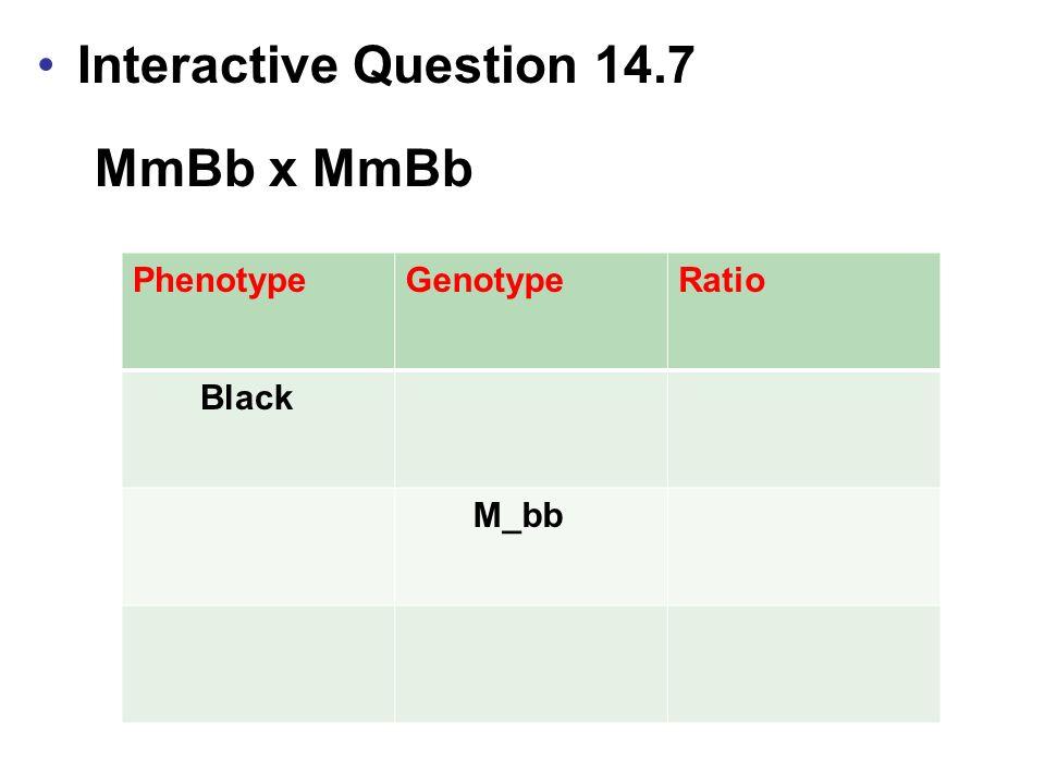PhenotypeGenotypeRatio Black M_bb Interactive Question 14.7 MmBb x MmBb