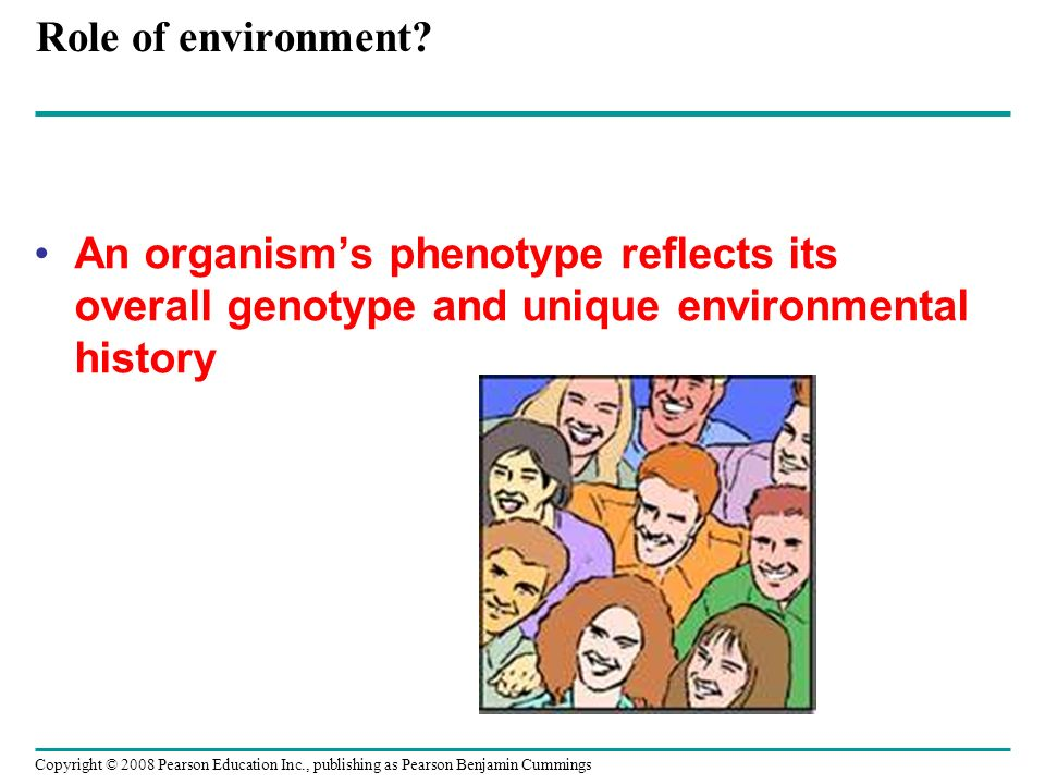 Role of environment? An organisms phenotype reflects its overall genotype and unique environmental history Copyright © 2008 Pearson Education Inc., pu