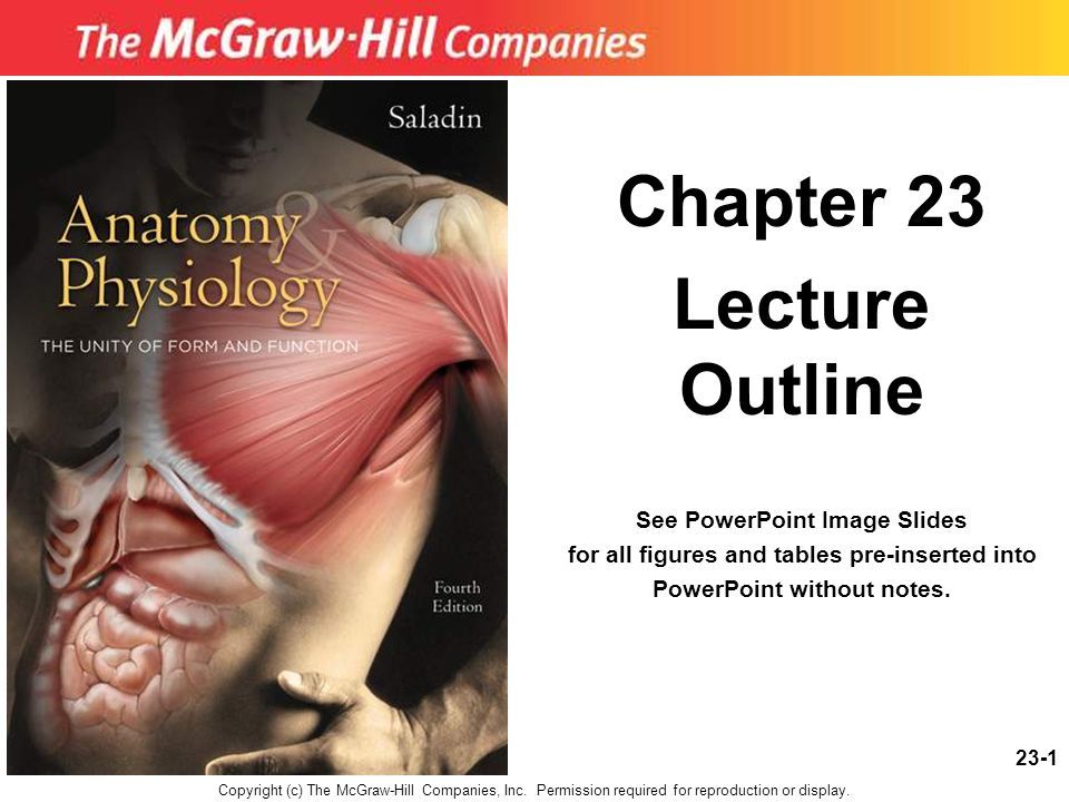 23-1 Chapter 23 Lecture Outline See PowerPoint Image Slides for all figures and tables pre-inserted into PowerPoint without notes. Copyright (c) The M