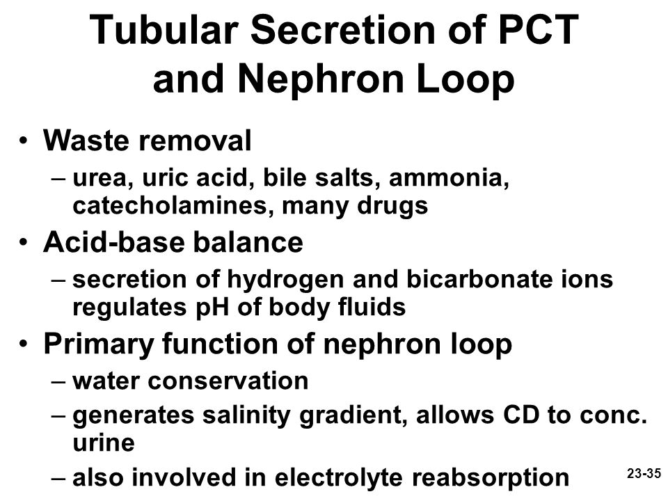 23-35 Tubular Secretion of PCT and Nephron Loop Waste removal –urea, uric acid, bile salts, ammonia, catecholamines, many drugs Acid-base balance –sec