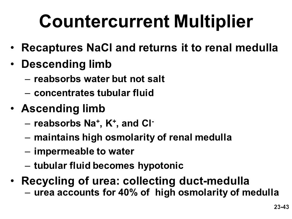 23-43 Countercurrent Multiplier Recaptures NaCl and returns it to renal medulla Descending limb –reabsorbs water but not salt –concentrates tubular fl