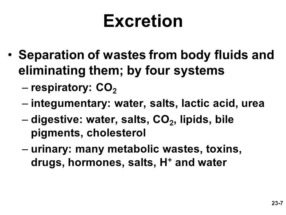 23-7 Excretion Separation of wastes from body fluids and eliminating them; by four systems –respiratory: CO 2 –integumentary: water, salts, lactic aci