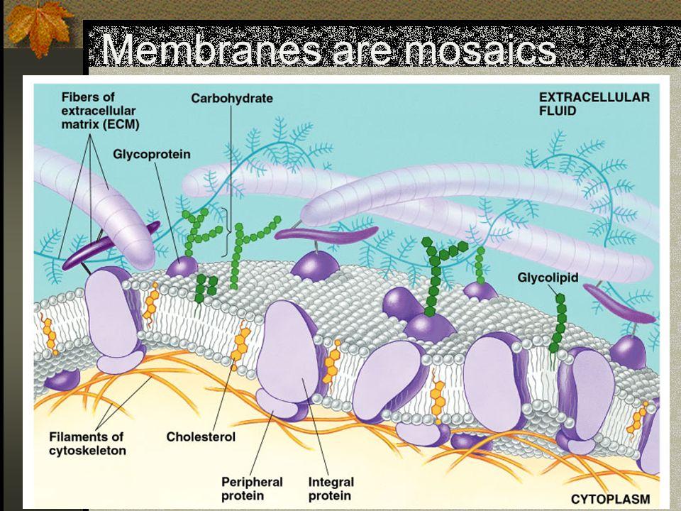 Membranes are mosaics
