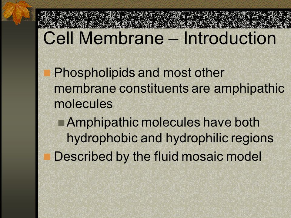 Endocytosis Two types: Phagocytosis: cell eating Pinocytosis: cell drinking Receptor mediated endocytosis