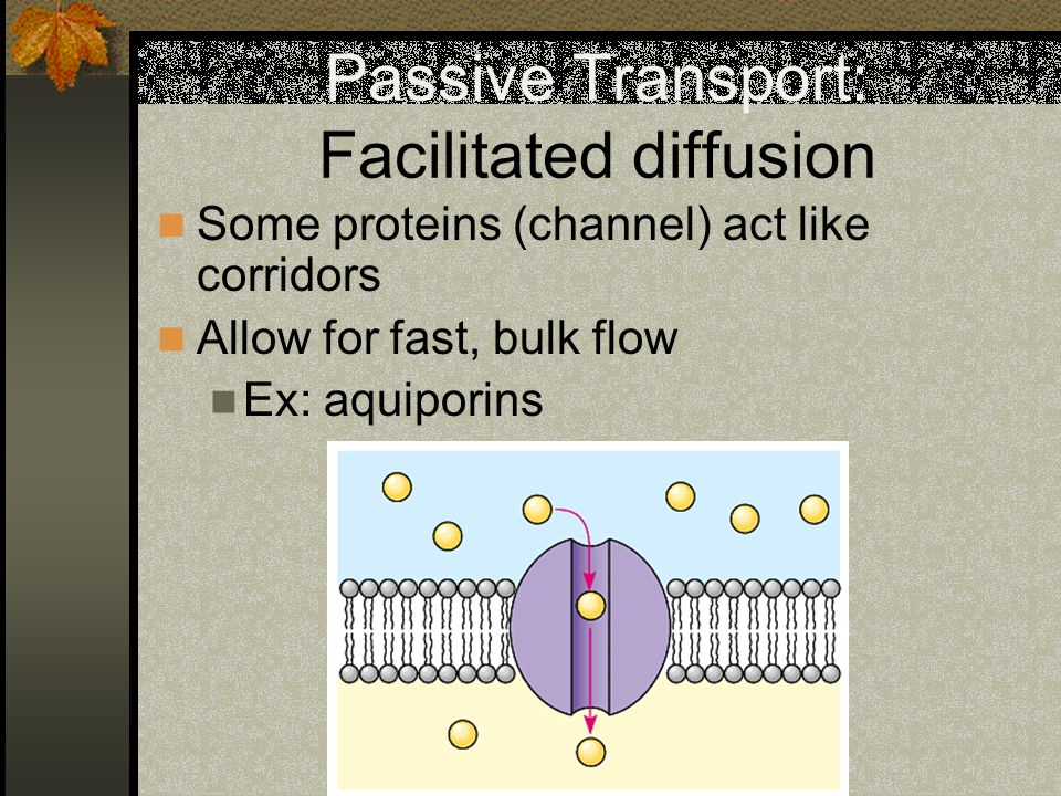 Passive Transport: Facilitated diffusion Some proteins (channel) act like corridors Allow for fast, bulk flow Ex: aquiporins