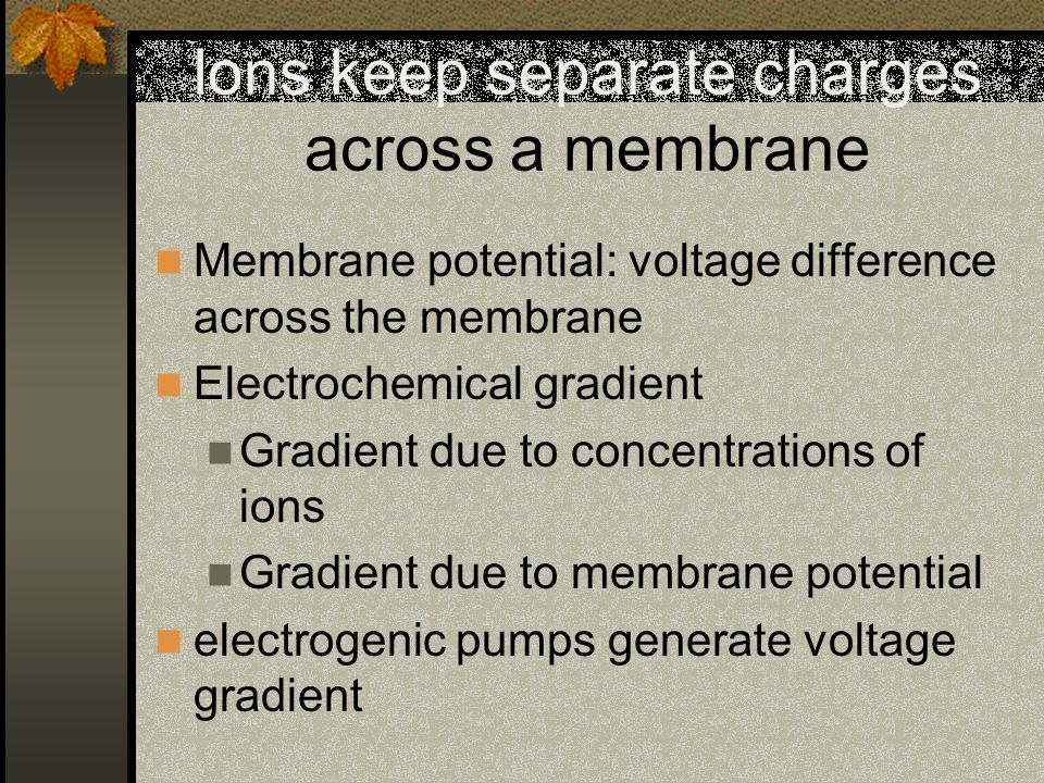Ions keep separate charges across a membrane Membrane potential: voltage difference across the membrane Electrochemical gradient Gradient due to conce