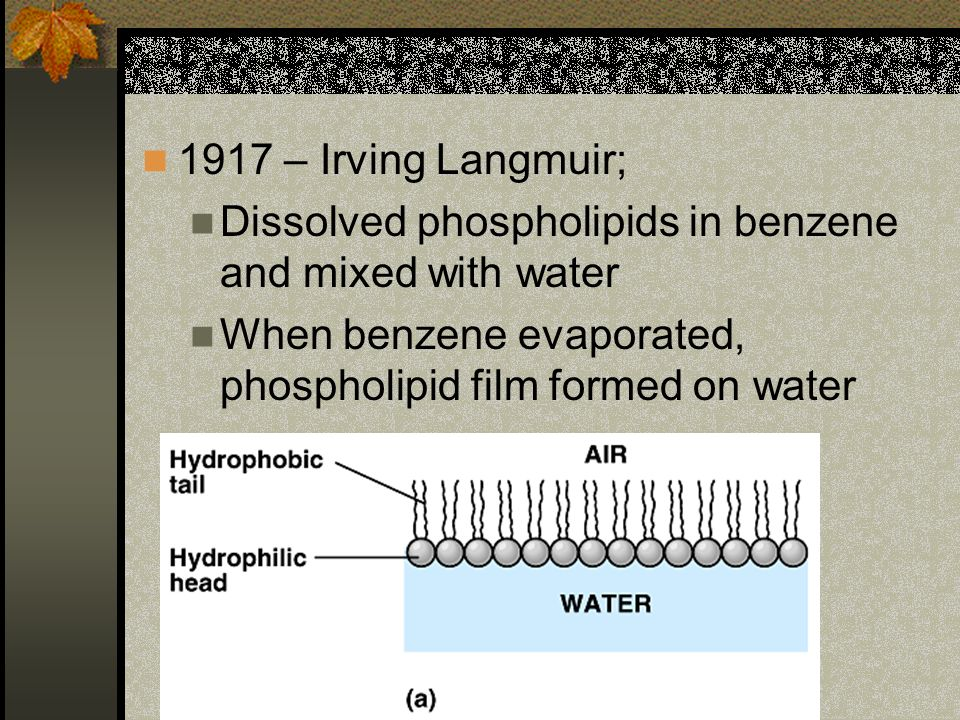 1917 – Irving Langmuir; Dissolved phospholipids in benzene and mixed with water When benzene evaporated, phospholipid film formed on water