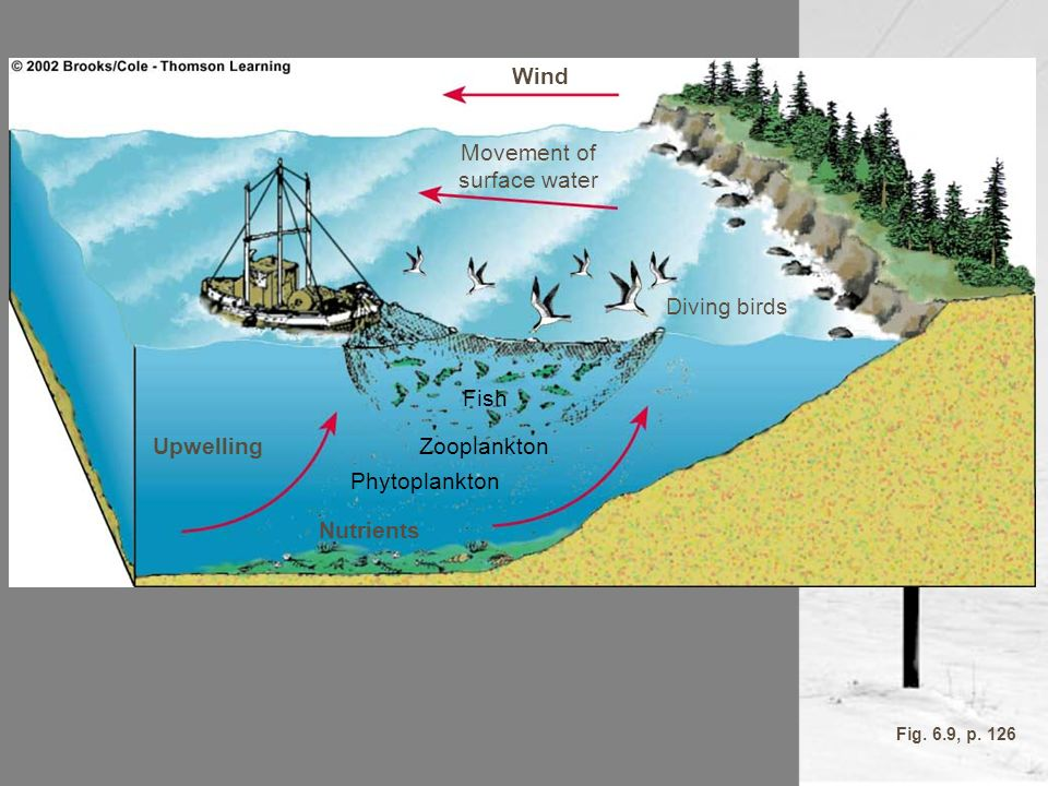 Wind Movement of surface water Diving birds Nutrients Upwelling Fish Zooplankton Phytoplankton Fig. 6.9, p. 126