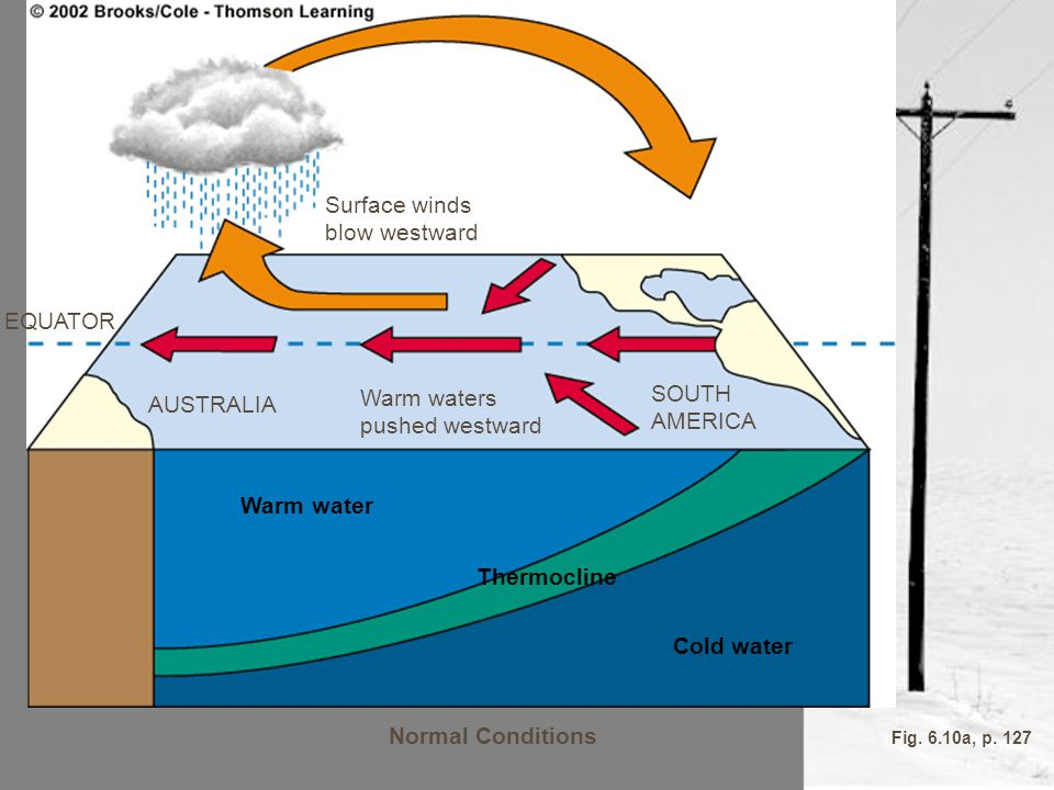 Normal Conditions Cold water Warm water Thermocline SOUTH AMERICA Warm waters pushed westward AUSTRALIA EQUATOR Surface winds blow westward Fig. 6.10a