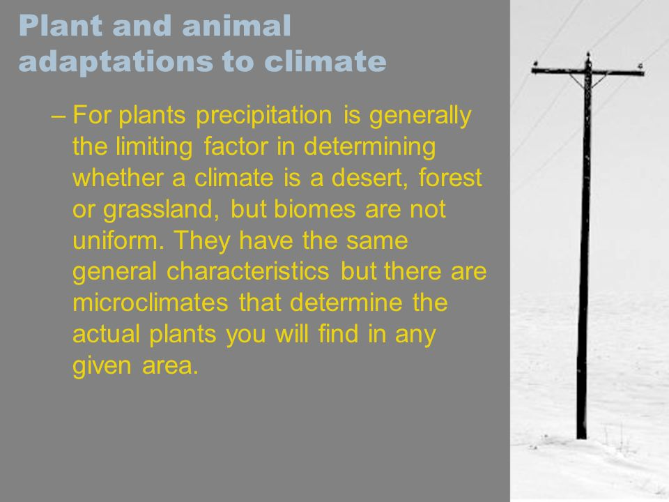Plant and animal adaptations to climate –For plants precipitation is generally the limiting factor in determining whether a climate is a desert, fores
