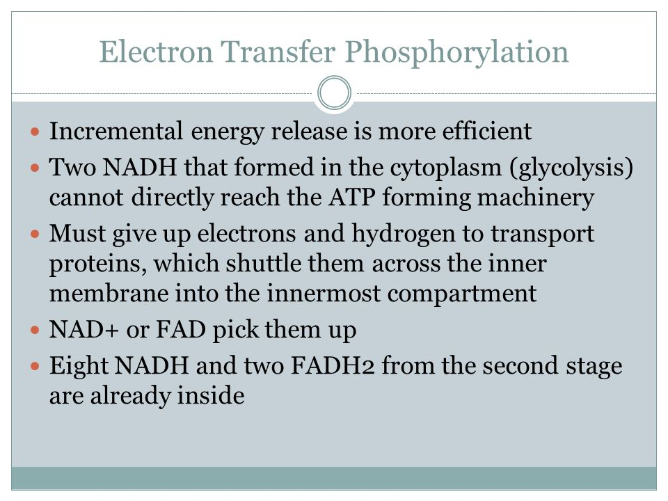 Electron Transfer Phosphorylation Incremental energy release is more efficient Two NADH that formed in the cytoplasm (glycolysis) cannot directly reach the ATP forming machinery Must give up electrons and hydrogen to transport proteins, which shuttle them across the inner membrane into the innermost compartment NAD+ or FAD pick them up Eight NADH and two FADH2 from the second stage are already inside