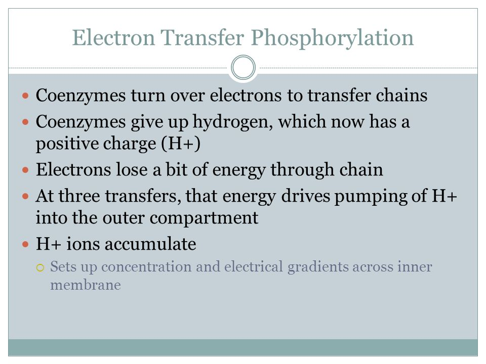 Electron Transfer Phosphorylation Coenzymes turn over electrons to transfer chains Coenzymes give up hydrogen, which now has a positive charge (H+) El