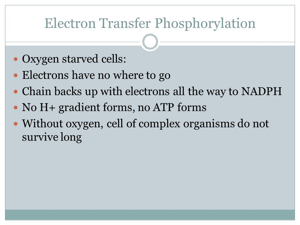 Electron Transfer Phosphorylation Oxygen starved cells: Electrons have no where to go Chain backs up with electrons all the way to NADPH No H+ gradient forms, no ATP forms Without oxygen, cell of complex organisms do not survive long
