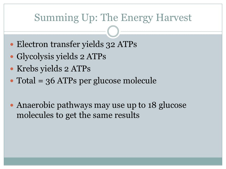 Summing Up: The Energy Harvest Electron transfer yields 32 ATPs Glycolysis yields 2 ATPs Krebs yields 2 ATPs Total = 36 ATPs per glucose molecule Anaerobic pathways may use up to 18 glucose molecules to get the same results